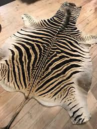 Zebra Skin Rug