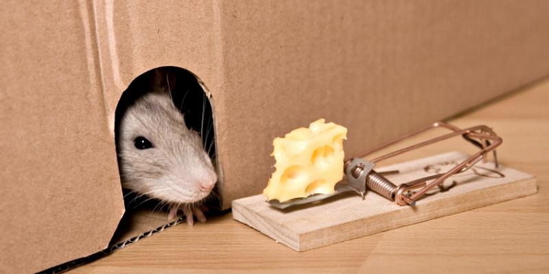 Tulsa Rat Control